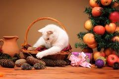 Chat blanc jouant avec des souris d'une peluche photos libres de droits