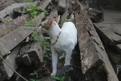 Chat blanc mignon portant un collier image stock