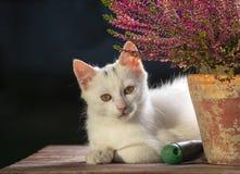 Chat blanc mignon près de fleur dans le jardin Photos libres de droits