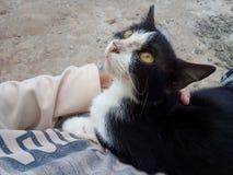Chat blanc noir mignon Image libre de droits