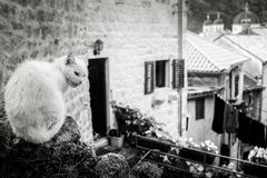Chat blanc peu amical dehors Photographie stock