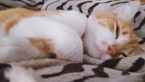 Chat blanc rouge drôle mignon sur la couverture clips vidéos