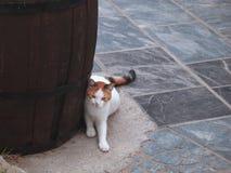 chat Blanc-rouge près d'un baril énorme sur la rue de la ville grecque de Rethymnon photo stock
