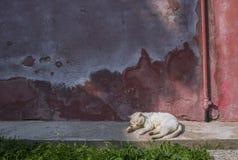Chat blanc se reposant dans une petite allée de l'île de Burano images libres de droits