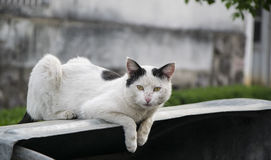 Chat blanc se trouvant sur la poubelle Photo stock