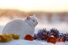 Chat blanc sur la neige Photographie stock libre de droits