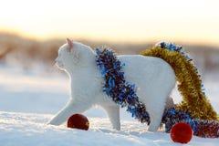 Chat blanc sur la neige Images stock