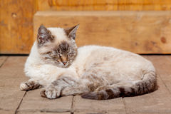 Chat blanc sur le porche Image libre de droits