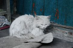Chat blanc sur le porche de village images stock