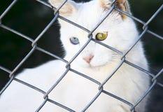 Chat blanc Van dans un abri avec différents yeux Image stock