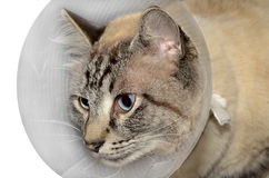 Chat blessé Photo stock
