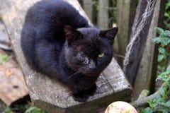Chat borgne blessé dans le village biélorusse image libre de droits