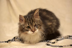 Chat borgne et pelucheux photo libre de droits