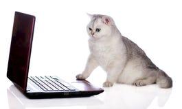 Chat britannique de shorthair sur un ordinateur Photos stock