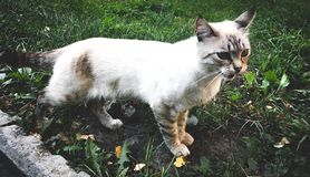 Chat brun blanc dans l'herbe Un animal sur la rue photos libres de droits