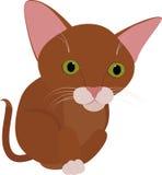 Chat brun drôle avec de grands yeux verts d'isolement sur le blanc Photographie stock libre de droits