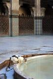 Chat buvant de la fontaine de mosquée Images stock
