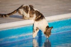 Chat buvant de la piscine Photographie stock libre de droits