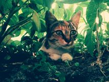 Chat caché coloré sauvage à la maison Photo stock