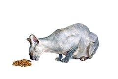 Chat canadien noir ou bleu de sphynx avec les yeux verts mangeant des aliments pour chats secs Images libres de droits