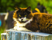 Chat Chat regardant l'appareil-photo Photos stock