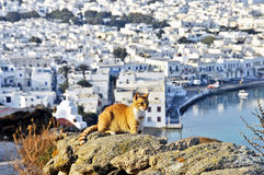 Chat chez Mikonos Photo stock