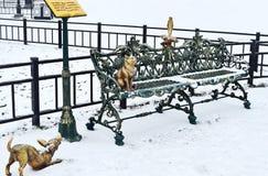Chat, chien et corneille sur le banc Image libre de droits
