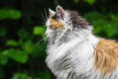Chat coloré par trois Photographie stock