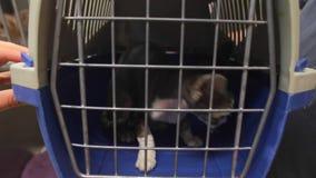 Chat confus dans la cage au vétérinaire banque de vidéos