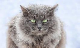 chat couvert de neige avec les yeux verts se reposant sur le street_ photo libre de droits