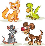 Chat, crabot, rat, perroquet Photos stock