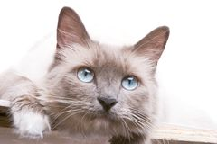 Chat curieux Photographie stock