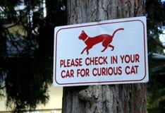 Chat curieux Photo libre de droits
