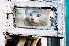 Chat curieux Photos stock