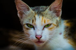 Chat curieux Image stock