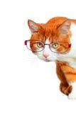 Chat curieux avec le côté de piaulement en verre Photographie stock