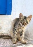 Chat curieux avec les yeux verts sur la rue tunisienne Photos stock