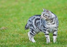 Chat curieux dans le jardin Photographie stock libre de droits