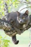 Chat curieux sur un arbre Photographie stock libre de droits