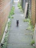Chat d'allée, parc de Hampden, East Sussex, R-U images libres de droits