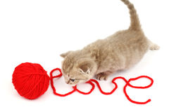 Chat d'amour Photo libre de droits