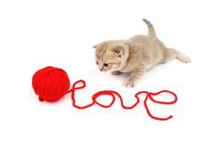 Chat d'amour Image libre de droits