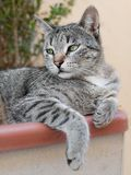 Chat d'animal familier Images stock