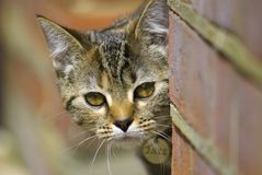 Chat d'animal familier Photos stock