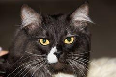 Chat d'animaux Photographie stock libre de droits