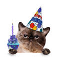 Chat d'anniversaire Image libre de droits