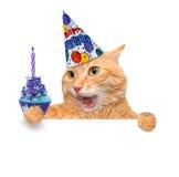 Chat d'anniversaire Photos stock