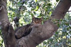Chat d'arbre Images libres de droits