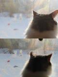 Chat d'hiver Images libres de droits