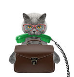 Chat d'homme d'affaires d'employé de bureau avec la valise ou sac d'isolement sur le blanc Photo stock